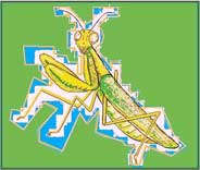 praying mantis art