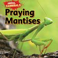 praying mantis, by sam hesper