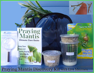 discovery praying mantis kit live